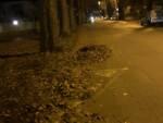 foglie sul marciapiede