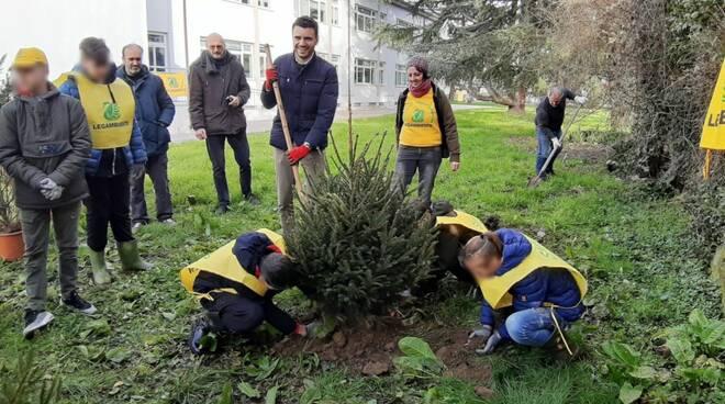 Giordano Del Chiaro scuola Nottolini Lammari alberi Natale