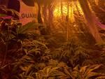 Sequestro cannabis a Viareggio