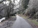 Una strada a Pescaglia