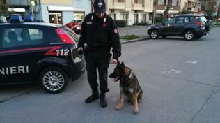 cane antidroga nucleo carabinieri san rossore pisa