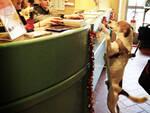 Punto Fido lettore Biblioteca Montanelli fucecchio è pet friendly