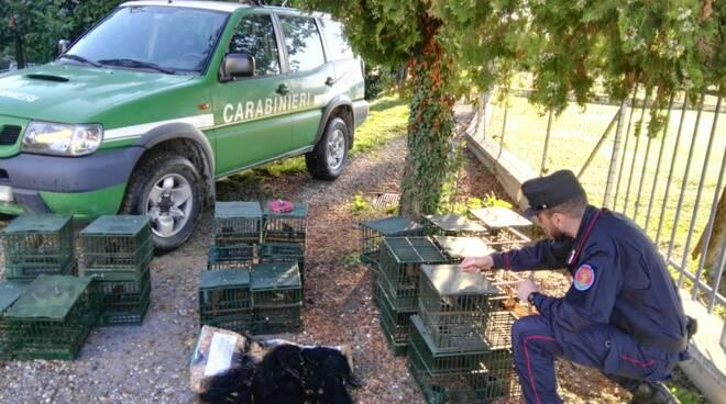carabinieri forestali richiami vivi uccelli denuncia Arni Stazzema