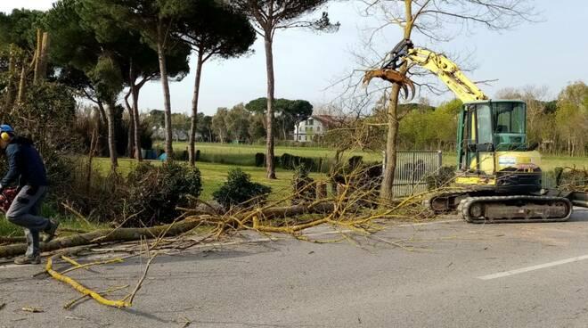 Consorzio di Bonifica 4 Basso Valdarno alberi pisa