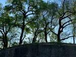 albero spezzato sulle Mura