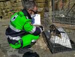 Anpana trasferimento cuccioli Toscana Lazio emergenza