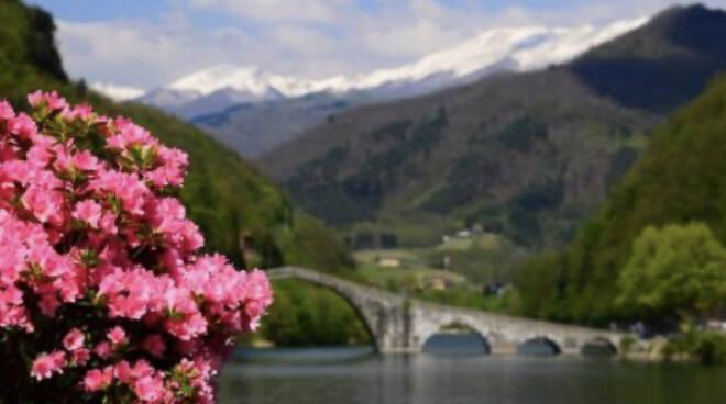 Azalea Borgo a Mozzano