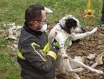 cane salvato dai vigili del fuoco a Peccioli