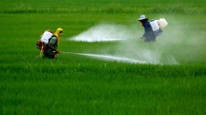 glifosato acque provincia di Lucca analisi Arpat erbicida cancerogeno