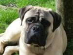 Django cane smarrito
