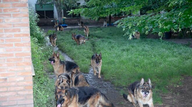 liberazione di 52 pastore tedesco al canile di Filettole Vecchiano