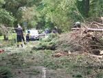 albero caduto viale dei Tigli Torre del Lago