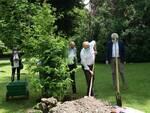 piantumazione metasequoia 200 anni orto botanico di Lucca