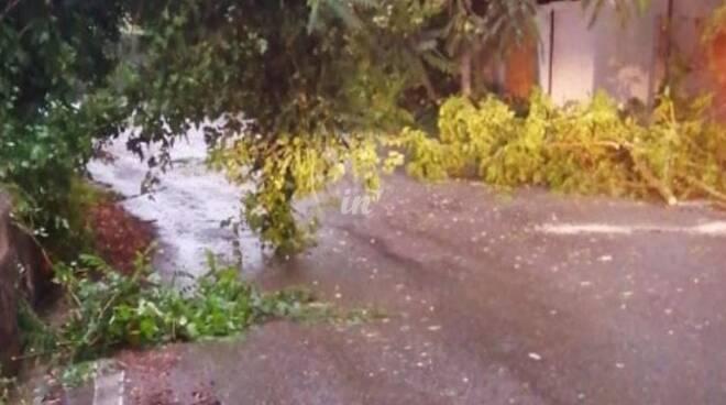 Rami pericolanti, tegole e fulmini nell'ondata di maltempo del 13 giugno 2020 tra Valdera e Cuoio