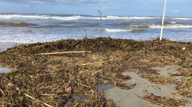 residui naturali sulle spiagge della versilia