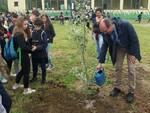 alberi piantumazione consorzio di bonifica