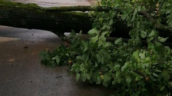 albero caduto mura piazzale San Donato