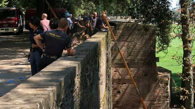 bambino cade dalle mura in bici