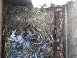 Canale Nuovo Marlia pulizia condotto
