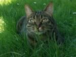 momo gatto ucciso da un'auto a San Filippo in via della Chiesa XXI