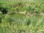 acqua nera nel torrente egola a san miniato