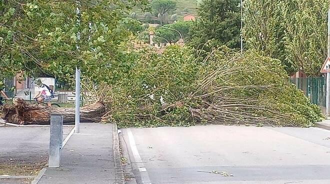 alberi abbattuti dal vento