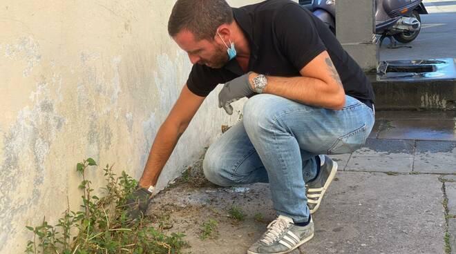 Casapound Fabio Barsanti pulizia erbacce centro storico