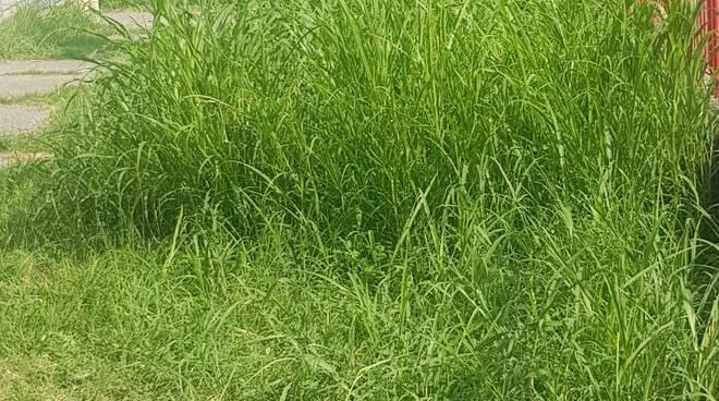 erba alta a San Cassiano a Vico