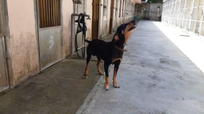 Kira cane abbandonato e adottato Porcari