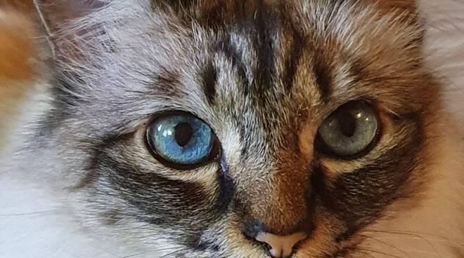 platone gatto smarrito