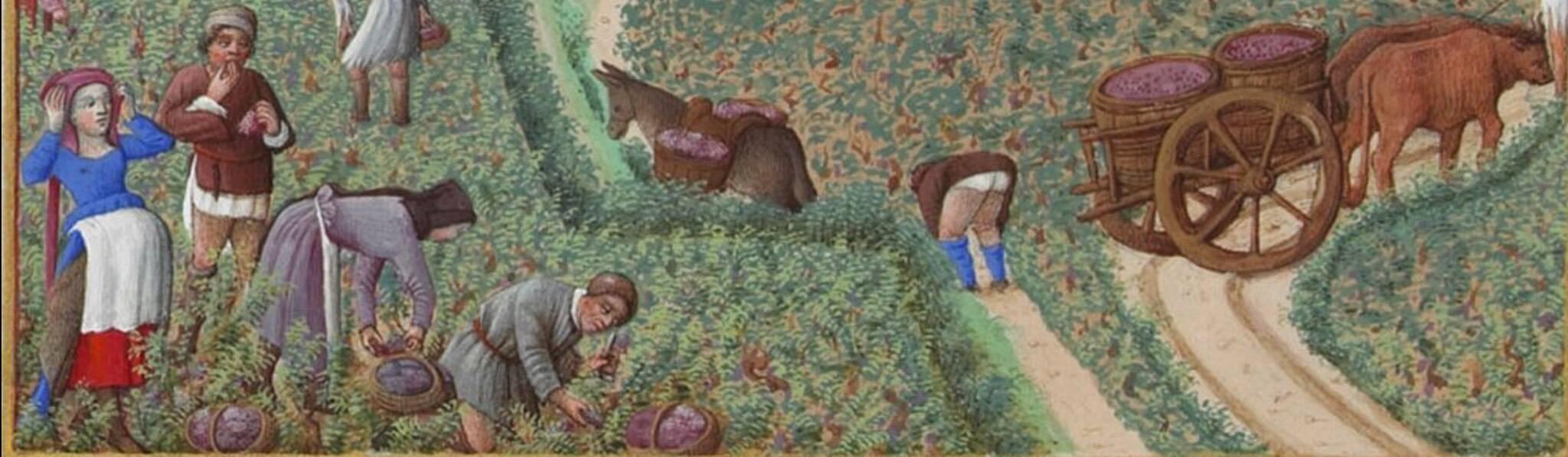Tappeti Volanti al sapore d'autunno