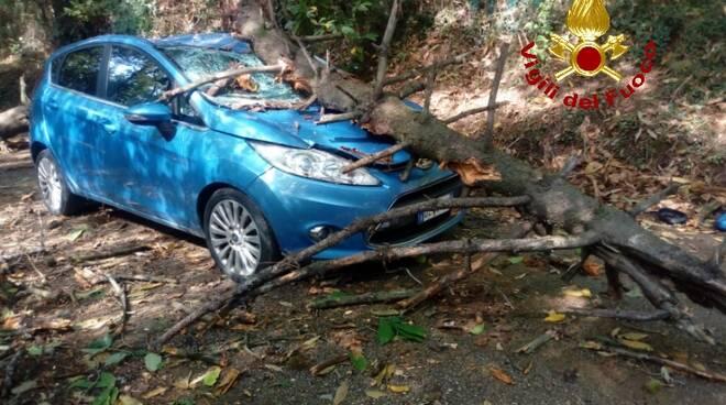 albero cade su auto a San Giuliano
