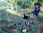 carabinieri con cani anti droga a galleno di fucecchio