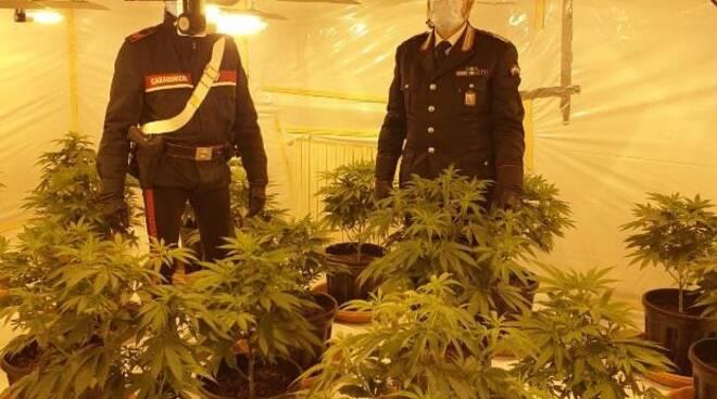 carabinieri san miniato droga marijuana
