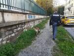 controlli antidroga scuole polizia Lucca
