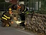 vigili del fuoco volontari salvataggio gatto Piccole Cucce Diecimo