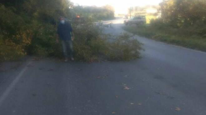 albero caduto nel compitese