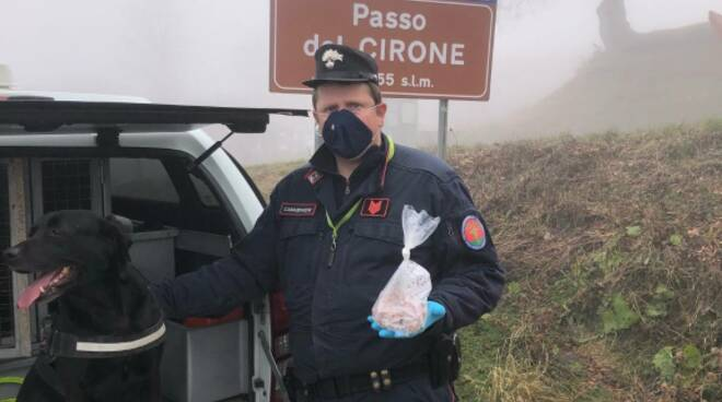 Cane antiveleno dei carabinieri