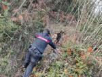 carabinieri empoli nei bosschi delle cerbaie a fucecchio