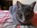 gatto Spritz San Cassiano a Vico