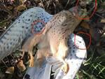 greppio ucciso bracconieri