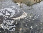 moria di pesci nel condotto pubblico