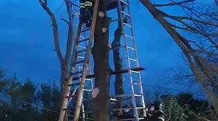 resta incastrato su un albero, salvato dai vigili del fuoco