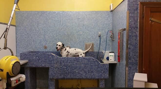 Toilette cani (Lapo, foto di Letizia Tassinari)