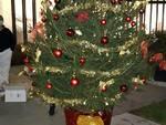 albero di natale al san luca