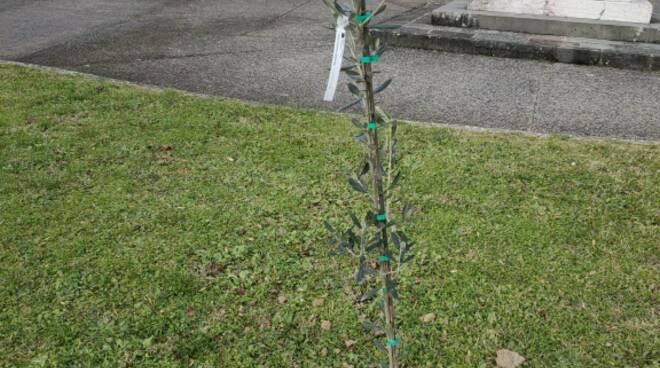 albero piantato La foresta che avanza