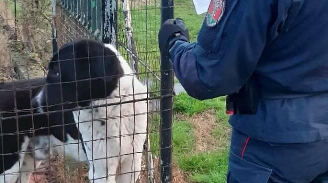 cane rubato armi droga Empoli Forestali