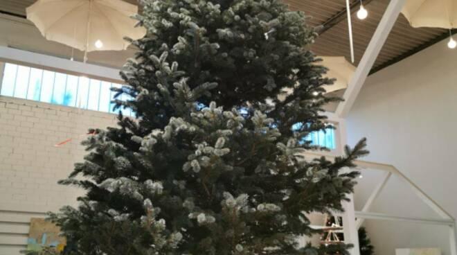 L'albero di tutti a Greenheart