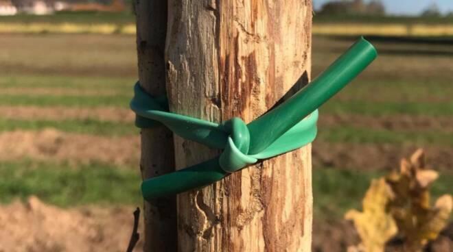 nuovi alberi associazione Talea