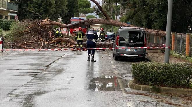albero caduto in via del Fortino a Lido di Camaiore